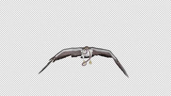 Snake Eagle with Serpent - Flying Loop - Front View