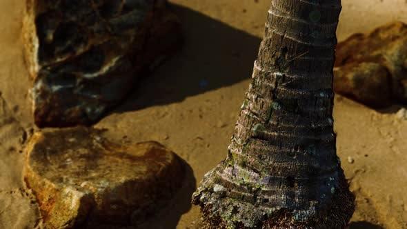 Closeup of a Palm Tree Trunk at Caribbean Sand Beach