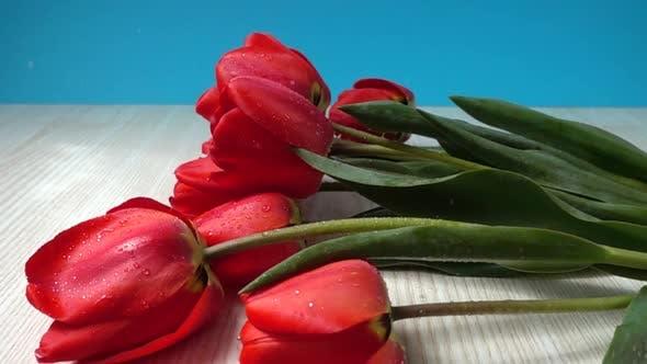 The Falling Tulips 2
