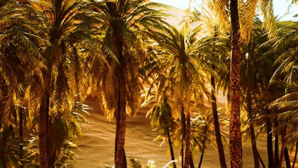 Palm Trees Inside the Dunes