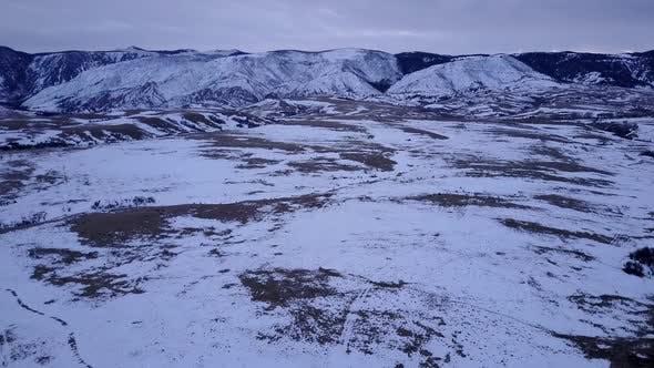 Elk Adult Immature Herd Many in Winter Dusk Twilight Evening in Winter Range
