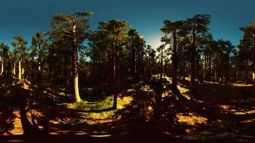 VR360 in Sequoia National Park
