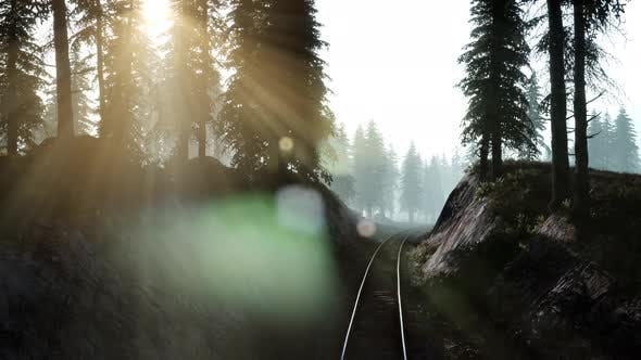 Thumbnail for Flight Over A Railway Surrounded By Forest