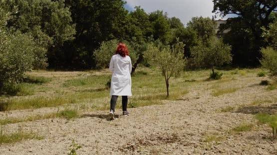 Young agronomist checks the olives in the countryside
