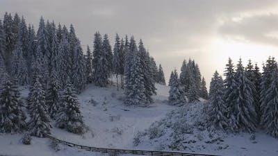 Static Shot Snow Trees Mountain Sunset - Fundata, Romania