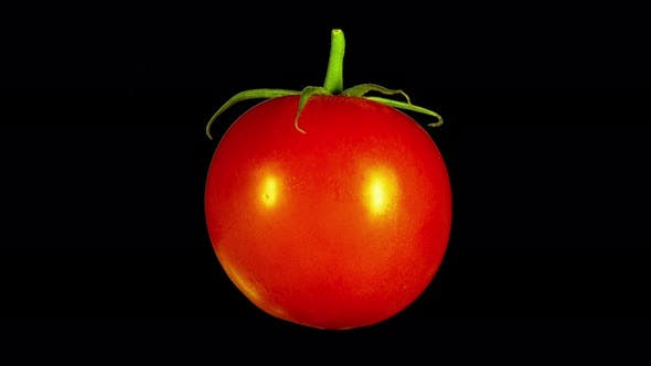 Thumbnail for Rotating Isolated Tomato