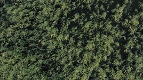 Reed Top Down Aerial