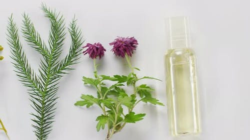 Plants And Beauty Product