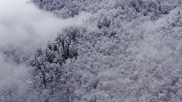Snowy And Foggy Mountain Spruce Forest Aerial