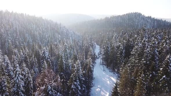 Thumbnail for Coniferous Forest . Aerial View