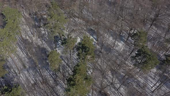 Thumbnail for Above forest trees after snowing 4K drone video
