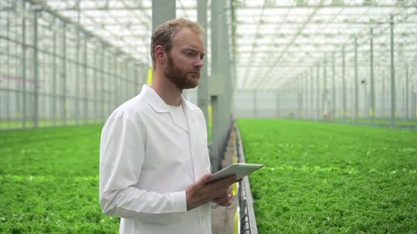 Hydroponic Farm Greenhouse of Man Agronomist Using Tablet Computer Standing in Garden Spbd