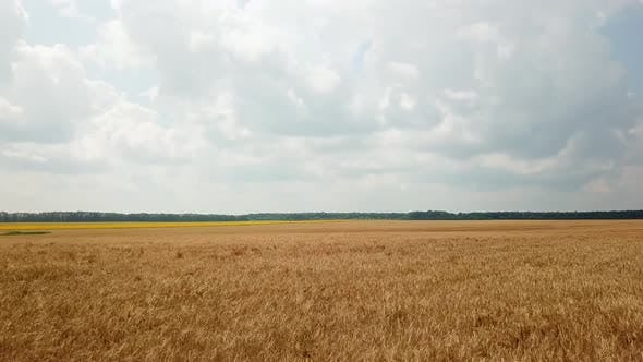 Thumbnail for Aerial View of the Land Sown with Wheat