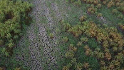 Dry texture crack land