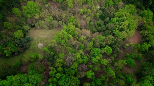 Green Tropical Rainforest Jungle View From Above
