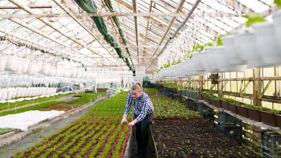 Thumbnail for Agriculture Female Gardener Working in Greenhouse