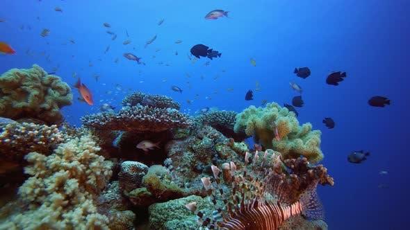 Thumbnail for Underwater Beautiful Scene