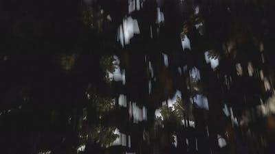 Forest 3d animation render 4K Ultra HD