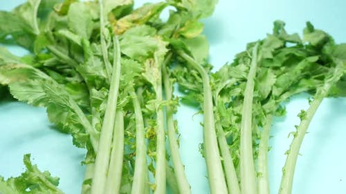 Closes up of white radish vegetable