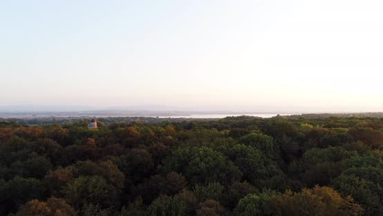 Aerial View of Forest - Flying Above Woods