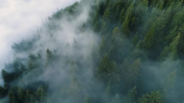 Thumbnail for Flying Through the Clouds and Mist, Forest on Mountain, Beautiful Morning Sunrise Natural Landscape