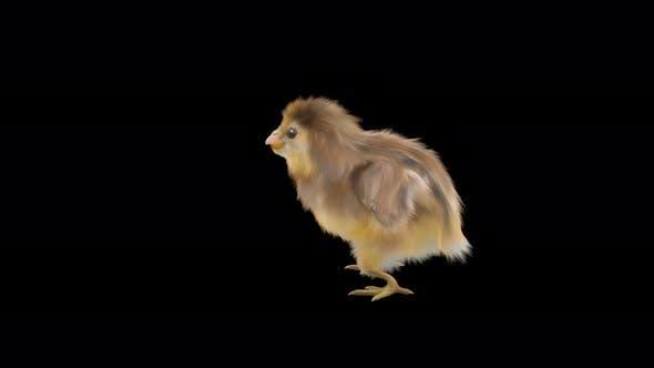 12 Baby Chicks Dancing 4K