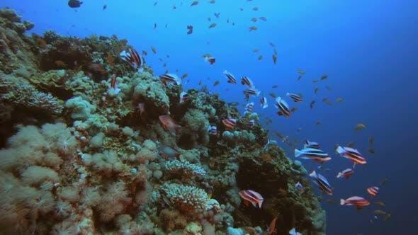 Thumbnail for Scene Marine Life