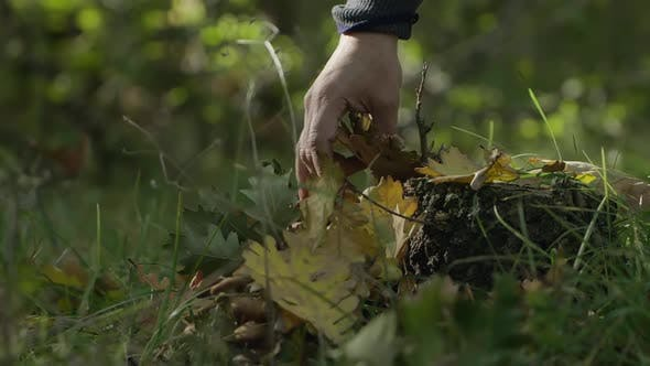 Cover Image for A Hand Taking an Autumn Leaves