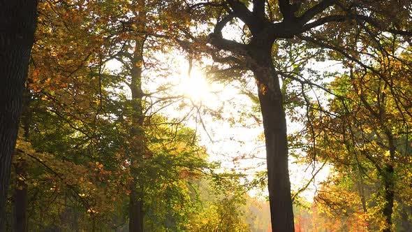 Thumbnail for Sun Shines Through Tree Crowns - Slider