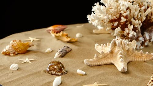 Yellow-white Coral Spiral and Shells on Sand, Black, Rotation