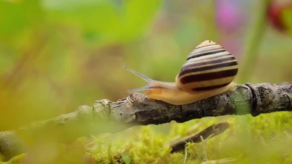 Thumbnail for Snail Slowly Creeping Along