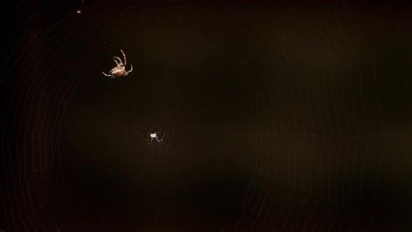 Thumbnail for Spinne webt ein Netz