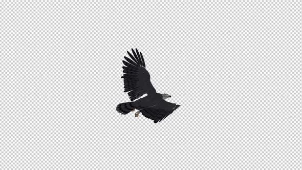 Harpy Eagle - Flying Loop - Back Angle