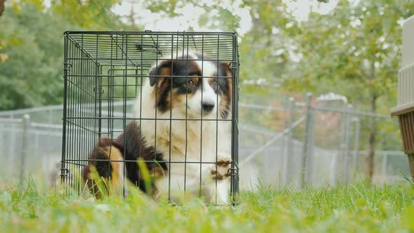 Thumbnail for A Sad Dog Sits in a Cage. Against the Background of the Enclosures with Other Sobs