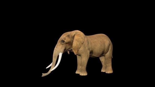 Circus Elephant Sleep