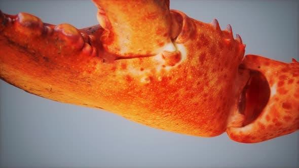Thumbnail for Griffe de homard en Macro