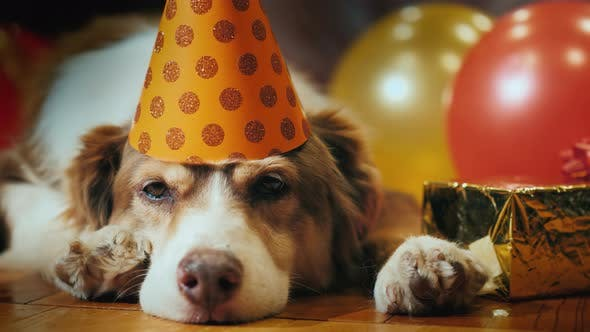Thumbnail for Portrait of a Birthday Dog In a Festive Cap