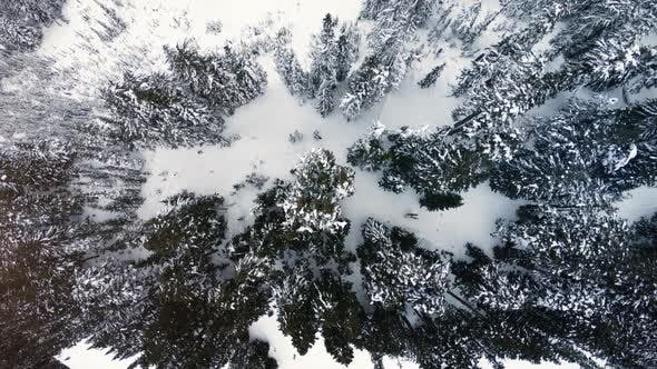 Thumbnail for Abstract Snow Covered Mountain Forest Canopy Tree Top Aerial