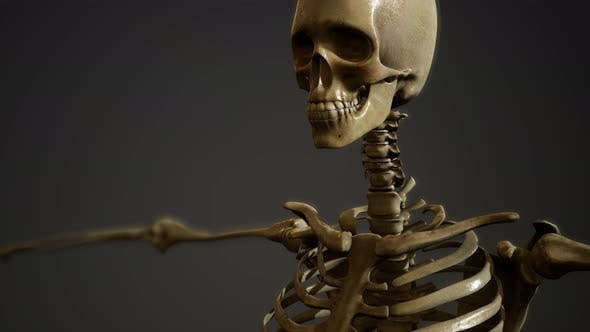 Cover Image for Bones of the Human Skeleton