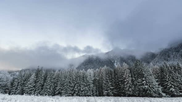 Winter Forest With Cloudy Sky