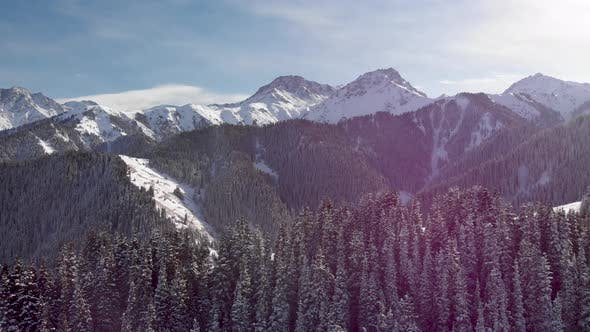 Aerial Shot of Winter Snow Forest in the Mountains