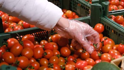 Woman's Hands Chooses Cherry Tomatoes in the Supermarket