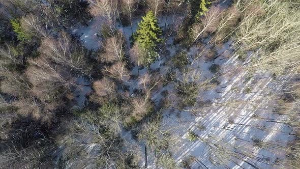 Thumbnail for Flying Over Winter Mixed Forest with Fir Trees and Birches