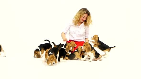 Thumbnail for Woman with Cute Beagle Puppy on a White on Studio. Slow Motion
