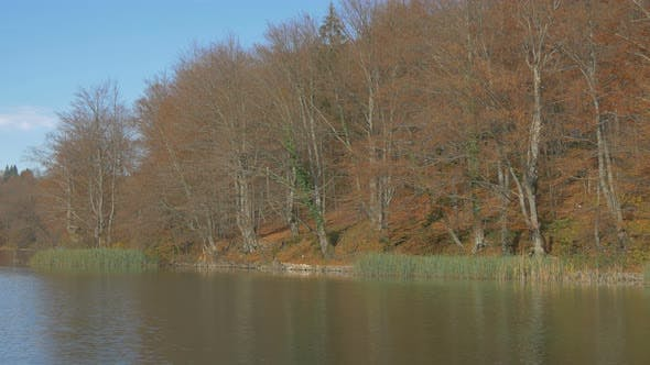 Thumbnail for Water reeds and leafless trees in Plitvice Park