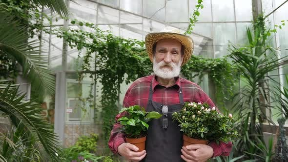 Thumbnail for Bearded Mature Man in Hat and Workwear Standing in the Middle of Beautiful Greenhouse