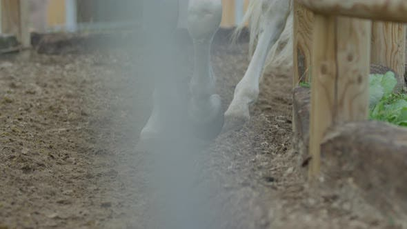 Horse keeping pace