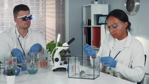 Black Female Research Scientist Making Experiment with Hamster in Modern Chemistry Laboratory