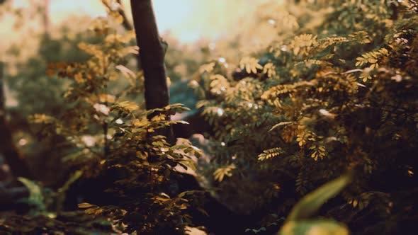 Thumbnail for Fog in the Mysterious Rainforest