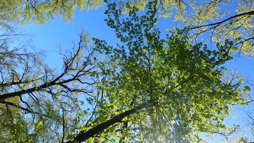 Vertical Video of the Forest in the Spring on a Sunny Day